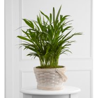 The FTD® Deeply Adored™ Palm Planter, USA