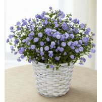 The FTD® Campanula, USA