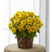 The FTD® Chrysanthemum, USA