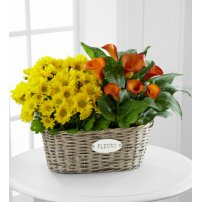 Golden Grace Calla Lily & Chrysanthemum Plant Duo, USA