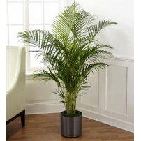 The FTD® Palm, USA
