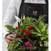 FTD Florist Designed Plants in a Basket, USA