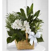 The FTD® Peace & Serenity™ Dishgarden, USA