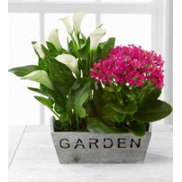 Sunlit Simplicity Dishgarden by BHG®, USA